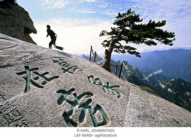 South Peak, pine tree, chinese characters engraved in stone, South Peak, Hua Shan, Shaanxi province, Taoist mountain, China, Asia