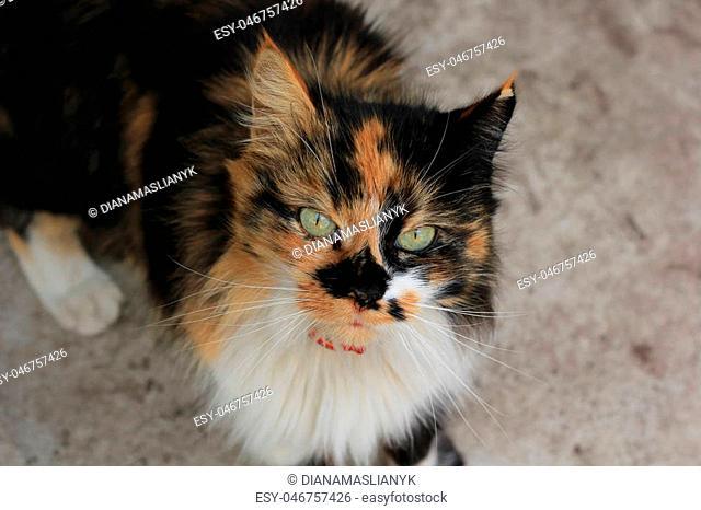 Calico cat on the ground