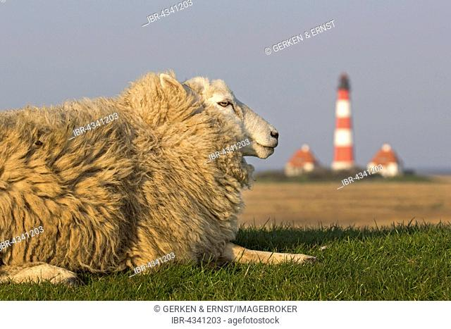 Sheep and lighthouse, Westerhever, Westerhever, Eiderstedt, North Frisia, Schleswig-Holstein, Germany
