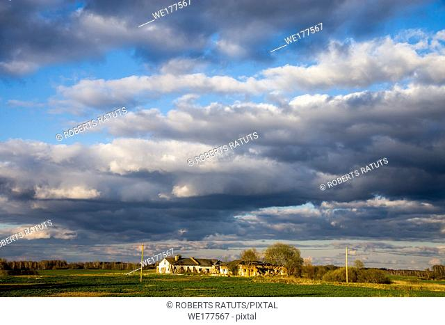 Green field with cereal and old farm house on the back, against a blue sky. Spring landscape with cornfield, wood and cloudy blue sky