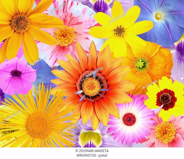 clorful flowers