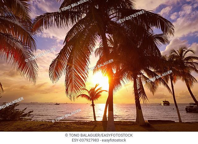 Isla Mujeres island Caribbean beach sunset palm trees Riviera Maya in Mexico