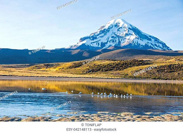 Bolivian panoramic: Sajama volcano and lake Huaynacota, in the Natural Park of Sajama. Bolivia
