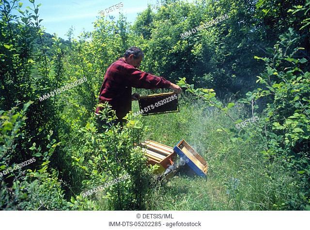Yiorgos Papadopoulos with his beehive  Kato Kariofito village  Nestos river, Xanthi, Thrace, Greece