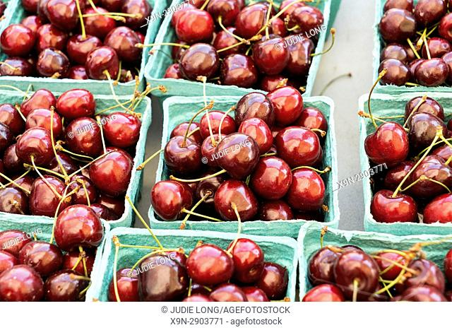 New York City, Manhattan. Paper Containers of Ripe Cherries, freshly picked, Displayed at an outdoor farmers market