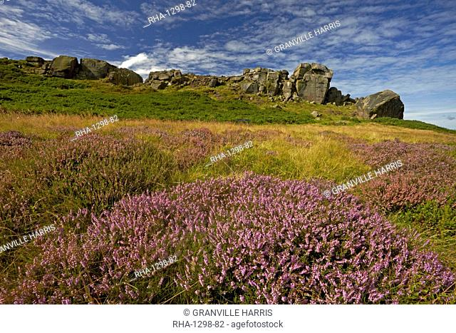 The Cow and Calf rocks and heather covered Ilkley Moor in late summer, West Yorkshire, England, United Kingdom, Europe