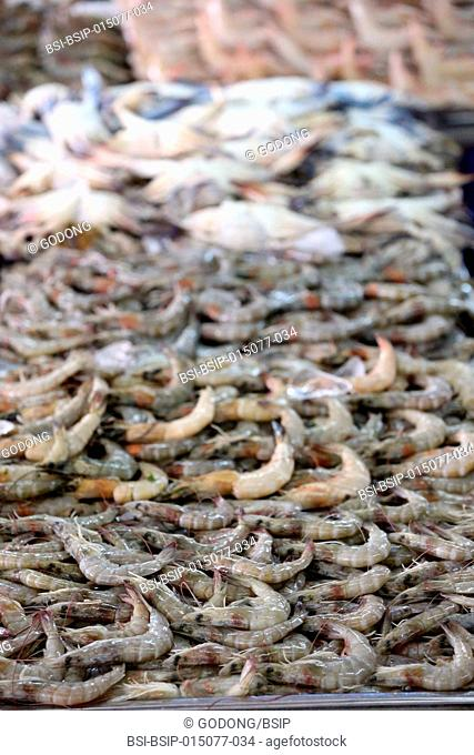 Mina port fish market, Abu Dhabi. Shrimps