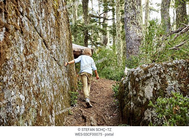Chile, Puren, Nahuelbuta National Park, boy passing boulder in an Araucaria forest