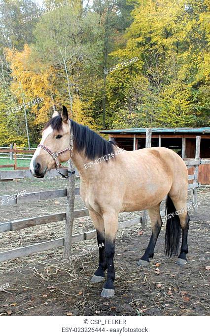 Portrait of beautiful horse in paddock