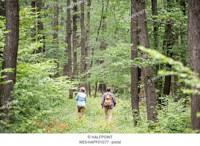 Back view of senior couple walking in the woods