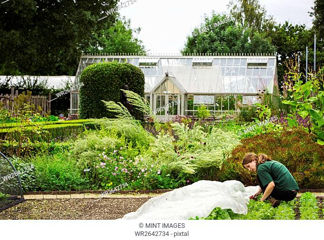 A woman gardening with a greenhouse in the background