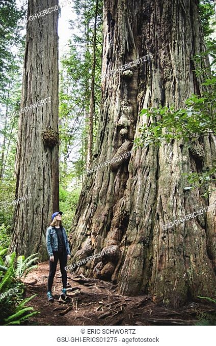 Young Woman Looking Up at Trees, Redwood National and State Park, California, USA