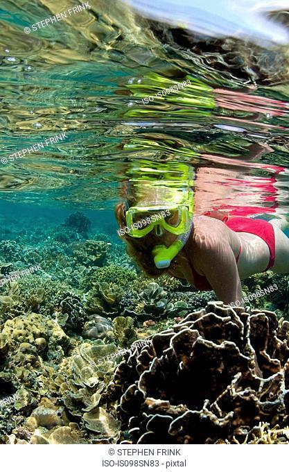 Snorkeler on coral reef