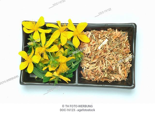 Saint John's Wort - medicinal plant - herb - Hypericum perforatum - Iperico