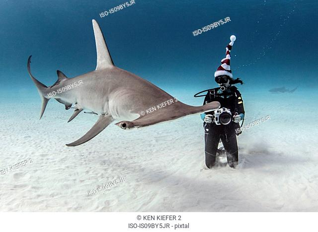 Underwater view of great hammerhead shark and female scuba diver with camera on seabed, Alice Town, Bimini, Bahamas