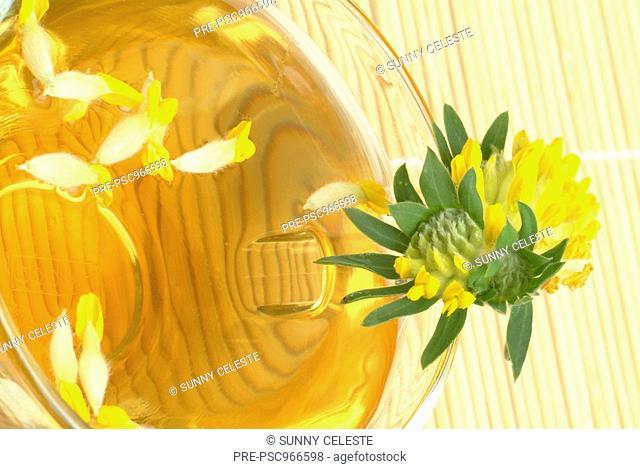 Kidney vetch, medicinal plant, medicinal tea, Anthyllis vulneraris, Vulneraria, te