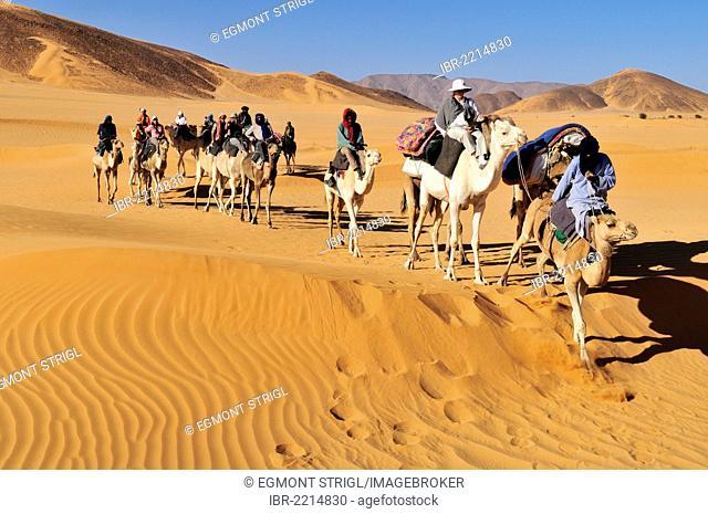 Touareg camel caravan with tourists travelling through low sand dunes of Erg Mehejibad, Immidir, Algeria, Sahara, North Africa