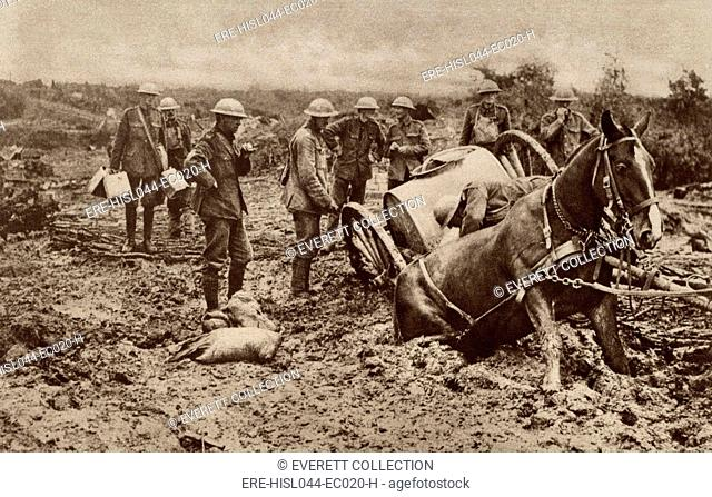 World War 1. British horse sunk to his haunches in the clinging mud of Flanders, during one of the five Battles of Ypres
