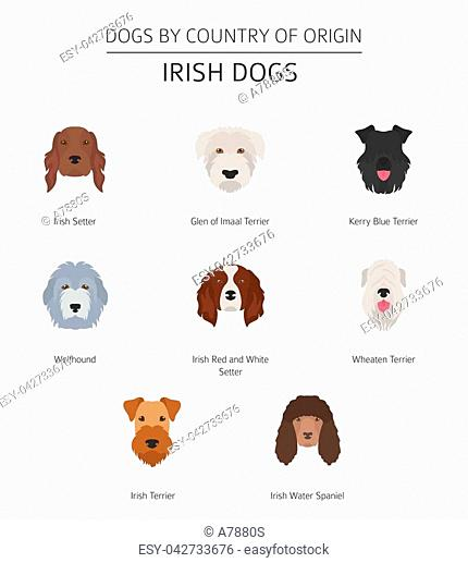 Dogs by country of origin. Irish dog breeds. Infographic template. Vector illustration