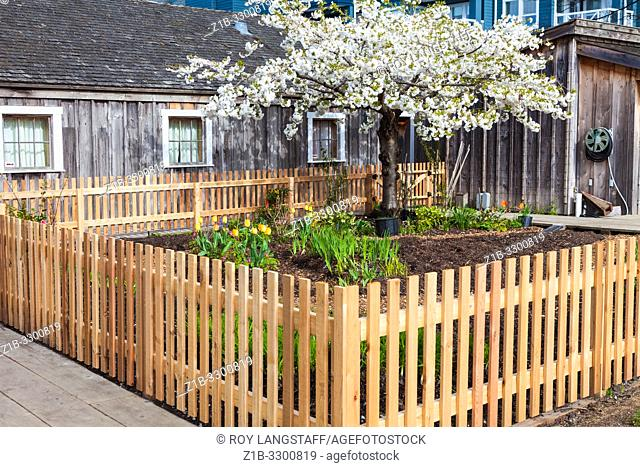 New garden fence and a replanted garden at the heritage Murakami house in Steveston