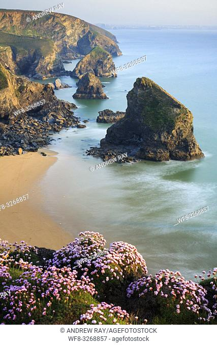 Bedruthan Steps sea stacks on the North Cornish Coast, captured from Park Head in mid May