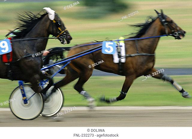 Side profile of horses running on racing track