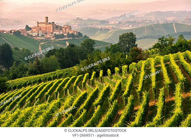 Italy, Piedmont, Cuneo District, Langhe - summer at Castiglione Falletto