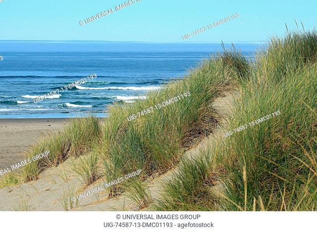 Pacific coastal dunes in the Oregon Dunes National Recreation Area