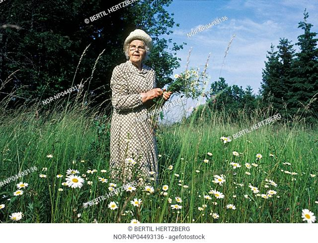 Elderly woman picking flowers on a meadow. Smaland SmAland Sweden