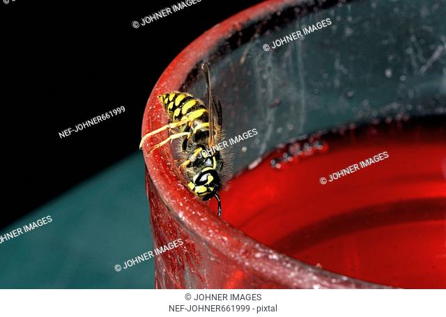 A wasp on a glass, close-up