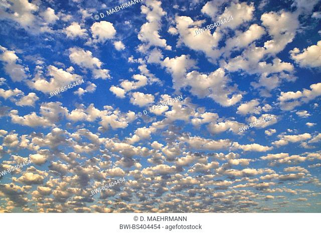 altocumulus stratiformis clouds in evening light, France, Brittany