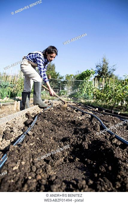Woman working on farm, preparing vegetable patch with hoe