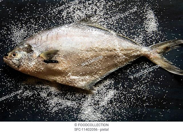 A whole tuna fish with sea salt (seen from above)