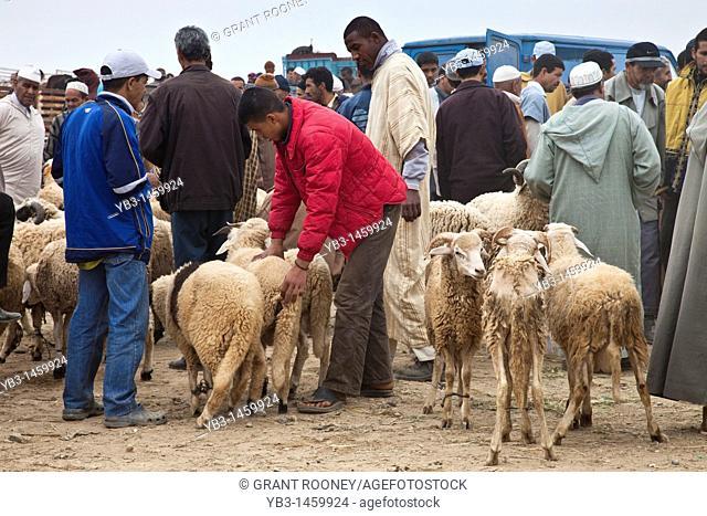 The famous Berber Sunday livestock market, Taroudant, Morocco