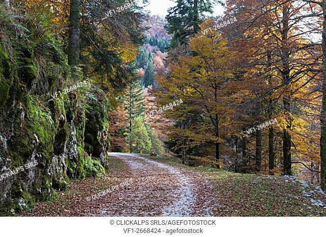 Cansiglio Forest, Tambre, Belluno, Veneto, Italy