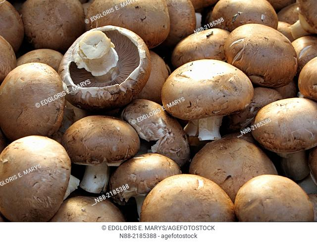 Mushroom for sale at the KKomarovsky market place Minsk, Belarus
