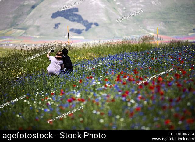 Views of flowering of lentil fields in Castelluccio di Norcia (Perugia) , ITALY-03-07-2020