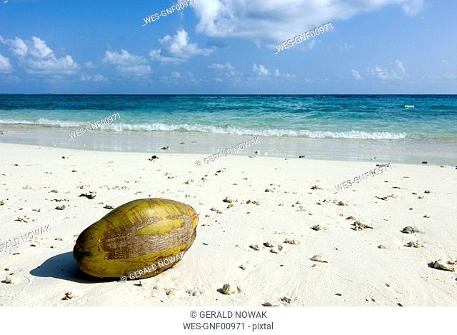 Maledives, Gan, Coconut lying at the beach