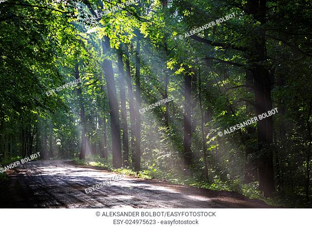 Ground road crossing old deciduous forest with beams of light entering, Bialowiezaa Forest, Poland, Europe
