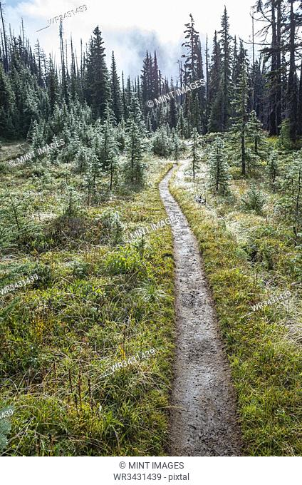 We and muddy hiking trail after mountain storm, lush subalpine meadow in distance, Mt. Adams Wilderness, Washington, along the Pacific Crest Trail