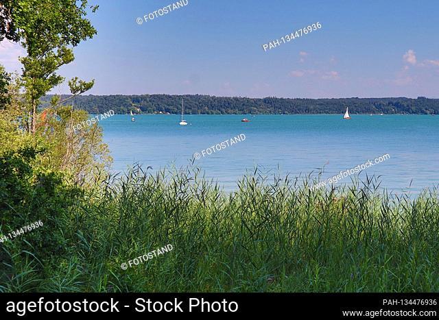District Starnberg, Germany August 1st, 2020: Impressions Starnberger See - 2020 Feldafing, Schilfl, Starnberger See, Feldafinger Park, Fuenfseenland, Bayern
