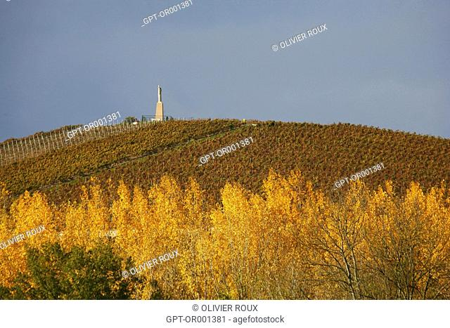 THE CHAMPAGNE REGION IN AUTUMN, THE AREA AROUND AY, MARNE (51), CHAMPAGNE-ARDENNE, FRANCE