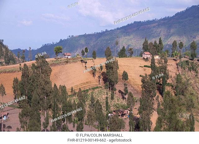 View of farmland and trees on hill slopes, near Bromo Tengger Semeru N P , East Java, Indonesia