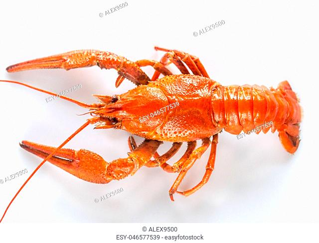 Boiled crayfish on the white background