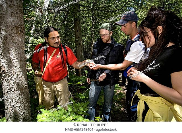 Canada, Ontario Province, Manitoulin Island, hiking at Cup and Saucer with the Amerindian guide Falcon Migwans, watching at plants