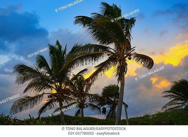 Caribbean sunset palm trees in Riviera Maya of Mayan Mexico