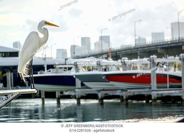 Florida, Miami Beach, MacArthur Causeway, bridge, marina, great white common heron egret, Biscayne Bay, water