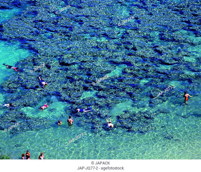 Great Barrier Reef, Qeensland, Australia