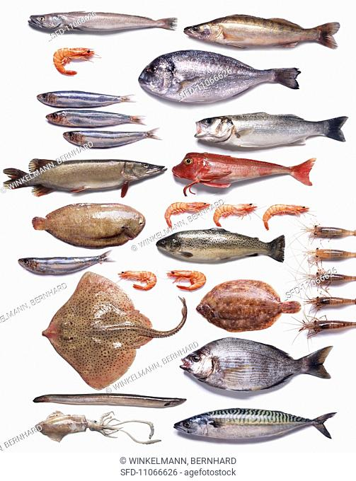 Lots of different fish and seafood