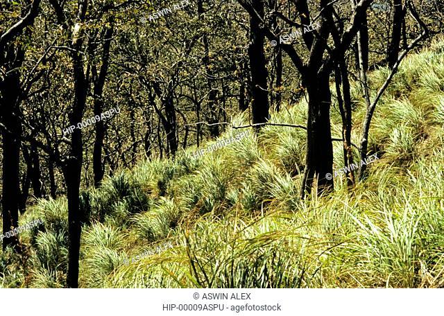 GRASSLANDS IN WESTERN GHATS, KERALA, INDIA